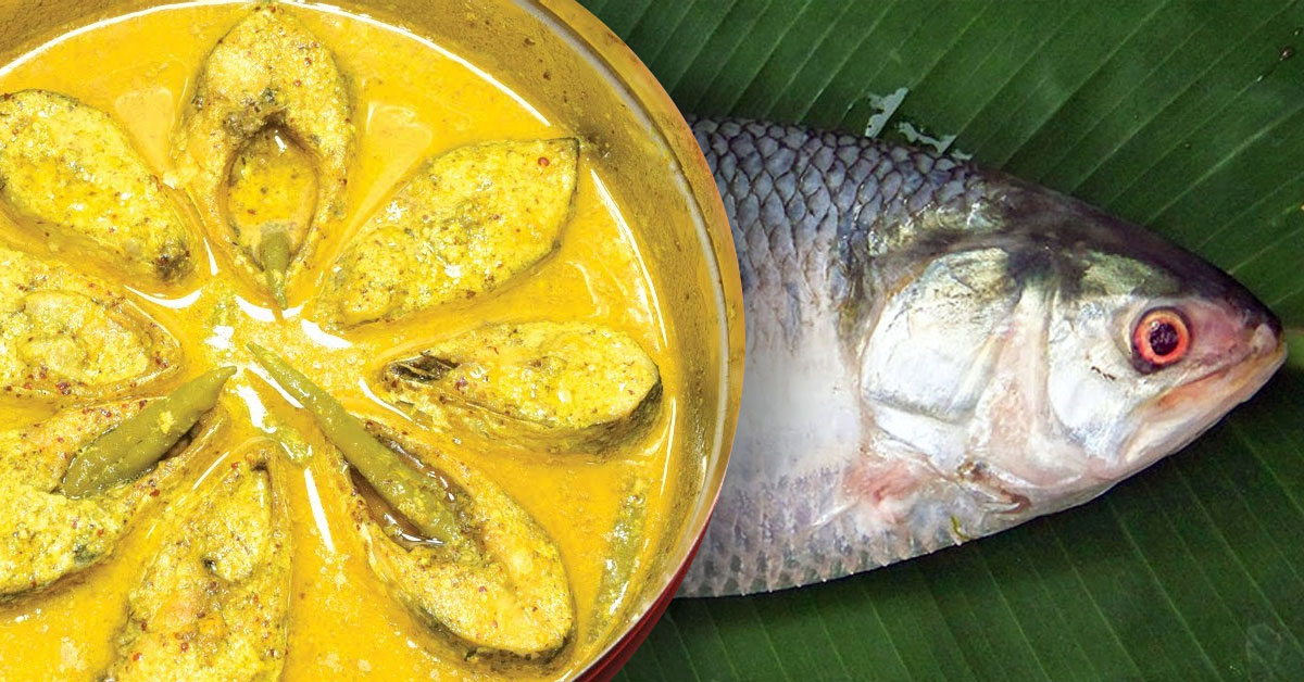Hilsa Fish, The King of all Fish