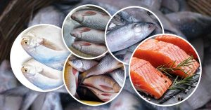 Read more about the article Top 5 Best Indian Fishes Rich in Protein Which Are Available In Local Markets