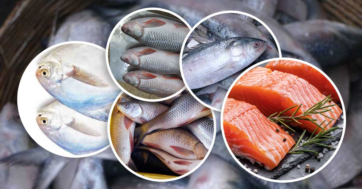 Top 5 Best Indian Fishes Rich in Protein Which Are Available In Local Markets