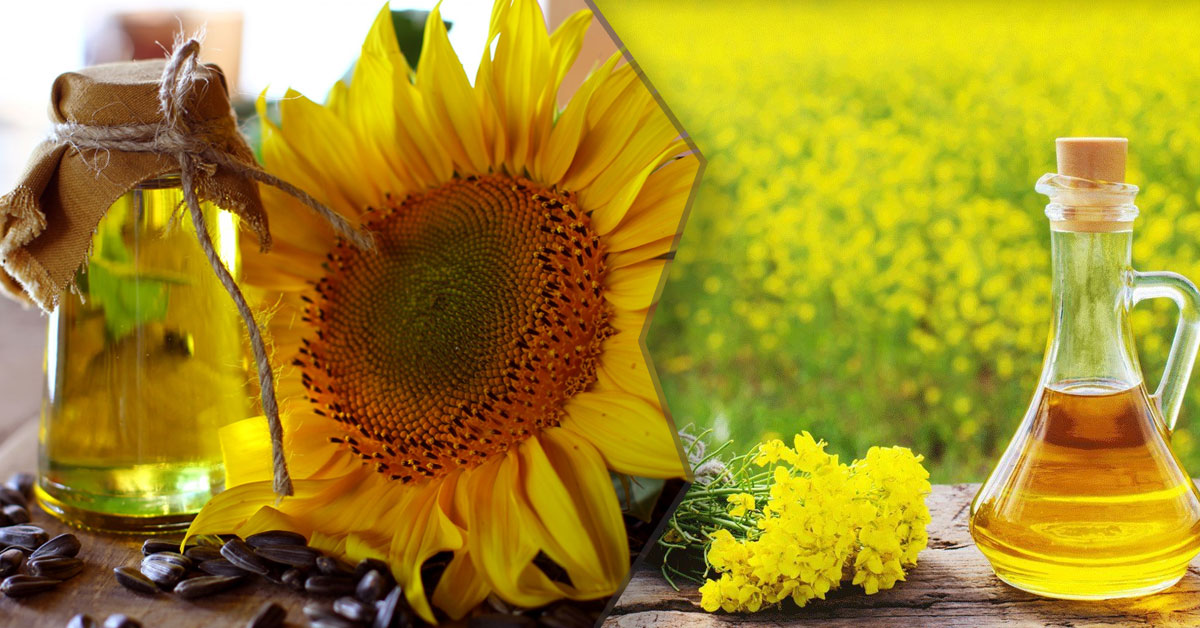 Read more about the article Sunflower Oil Vs Mustard Oil—Which One is the best for Individual's Health