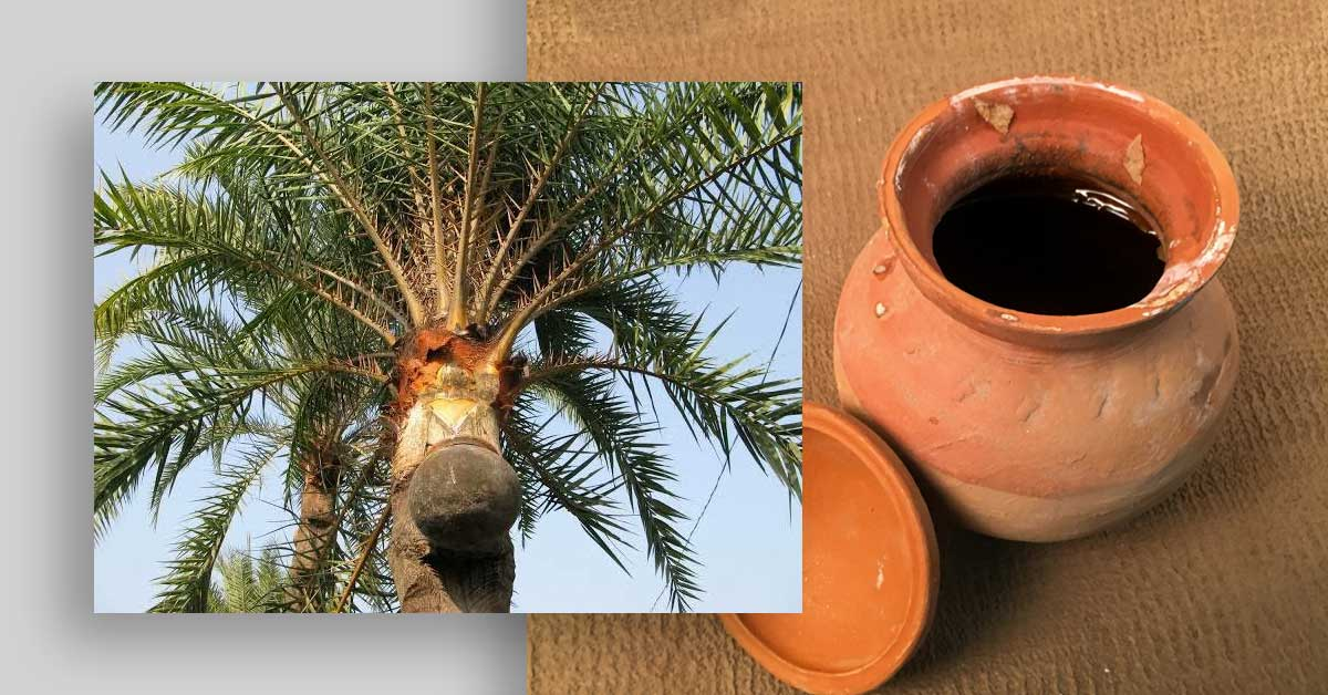 Read more about the article Amazing Facts You Didn't Know About Date Palm Jaggery (Khejur Gur)